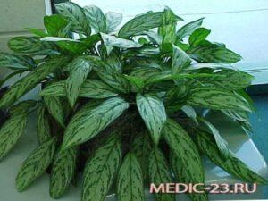 комнатные растения опасны для здоровья